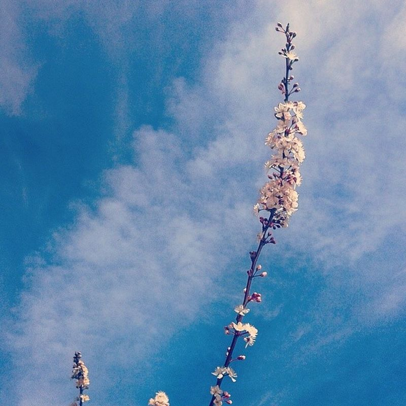 Springiness Flowertree Bloomtree Flower Smallflower pinkflower cloud sky sun sunday village countryside