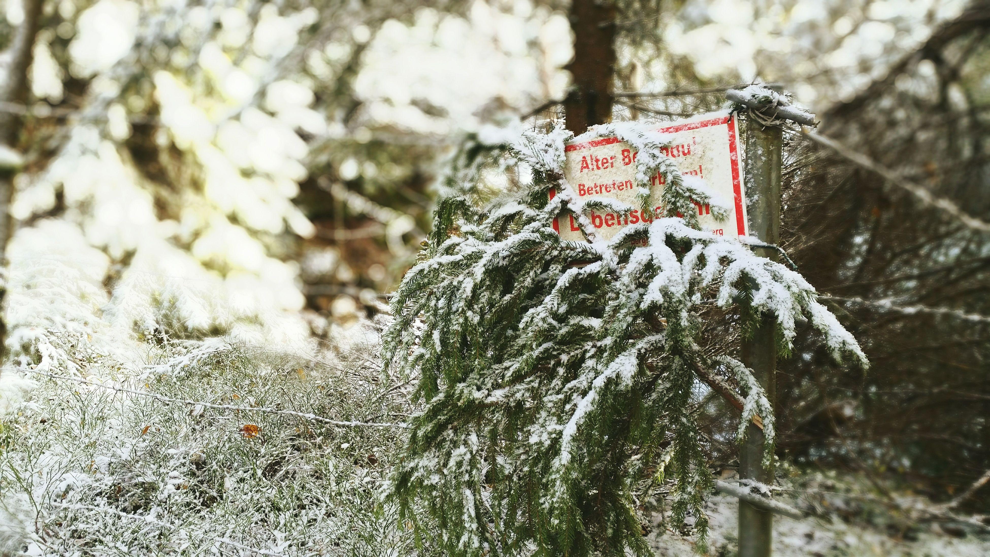 Wald Smartphonephotography Smartphone Photos Herbst🍁 Snow ❄ Beauty In Nature Sachsen Forest Bergbau ALTBERGBAU