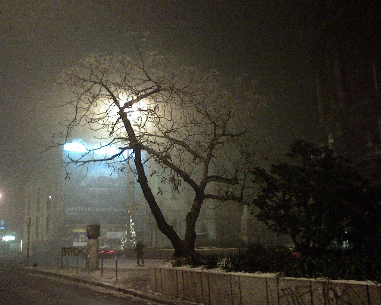 tree, illuminated, bare tree, transportation, night, fog, street light, outdoors, branch, road, sky, nature, no people, beauty in nature, city