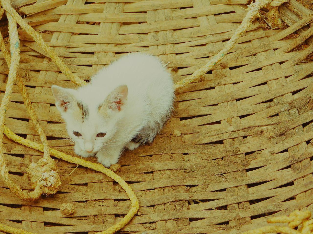 Cat Relaxing Pet Wild Wildlife & Nature Wildlife Beautiful Creation Cute