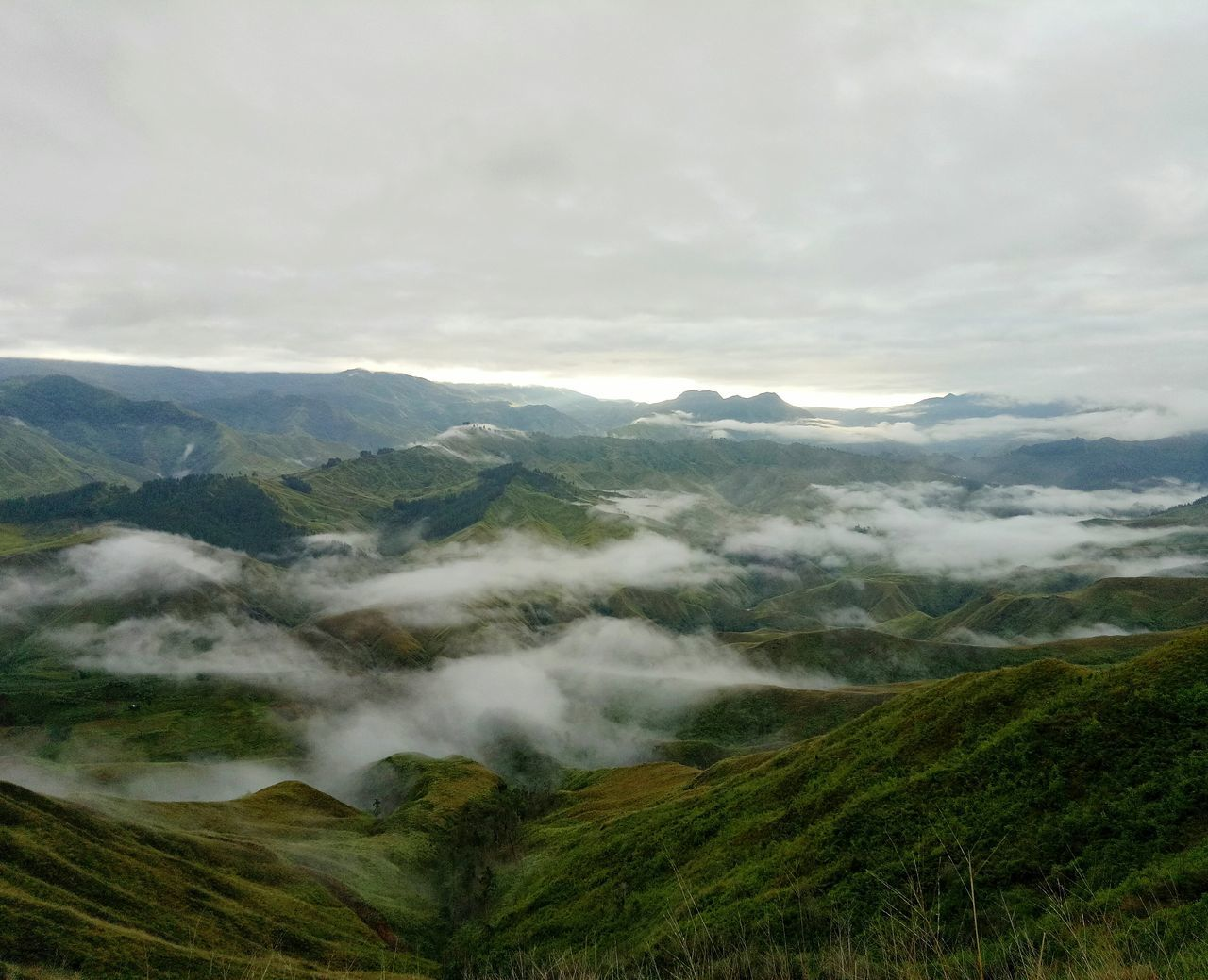 Panimahawaridge Panimahawa Bukidnon Malaybalay Mountain Nature Beauty In Nature Green Color Tree Forest Fog Mountain Range Cloud - Sky Sky Seaofclouds SeaOfClouds GodsCreations Morning Scenics Outdoors Adventure Adventuretime Trekking
