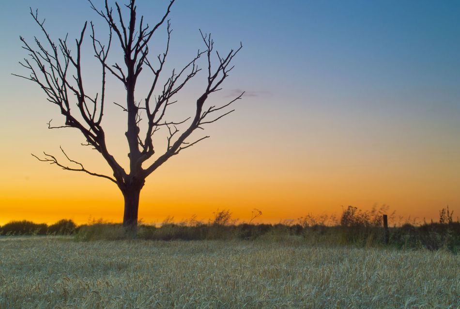 Accidents And Disasters Beauty In Nature Dramatic Sky East Yorkshire Hull Landscape Lone Tree Nature No People Orange Color Outdoors Plain Plant Romantic Sky Scenics Sky Sun Sunset Tree