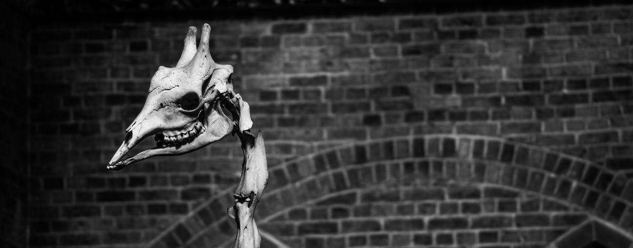 Beautiful stock photos of totenkopf, Animal Bone, Animal Skeleton, Animal Skull, Arts Culture And Entertainment