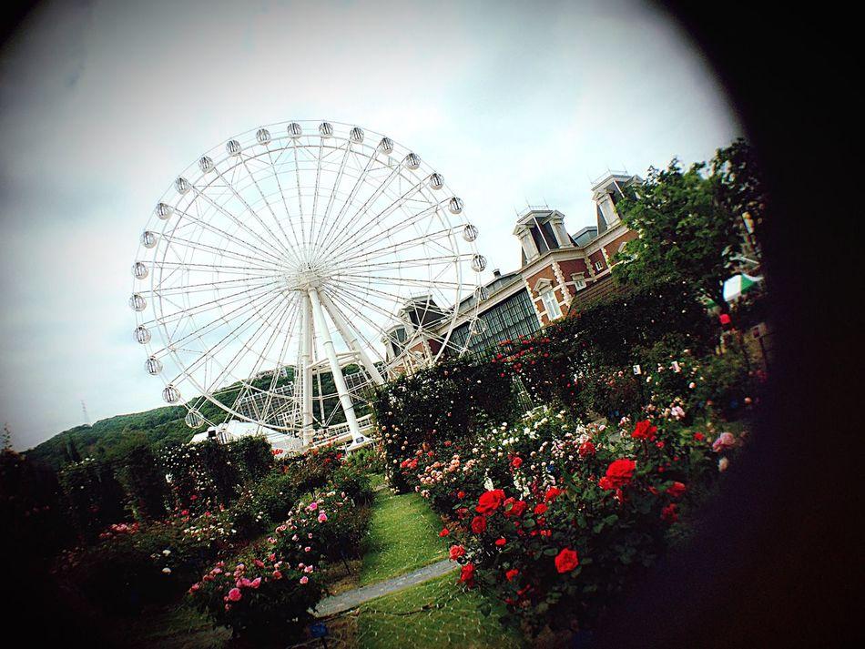 Ferris Wheel 🎡💐😳 관람차