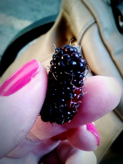 Blackberry Mulberry Raspberry Fruit That's Me Sorocaba Sorocity