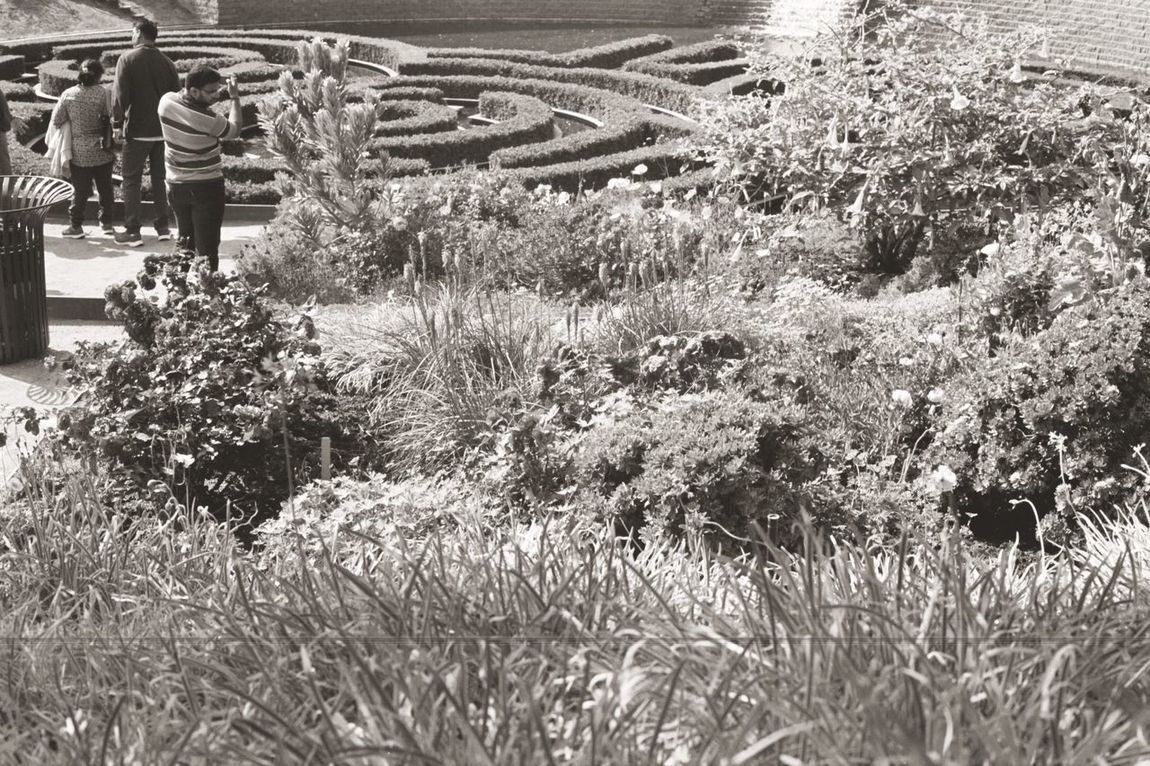Laying by the garden La The Getty Museum California Los Ángeles Los Angeles, California 35mmfilmphotography Black And White Landscape Outdoors Film Photography 35mmphotography Tranquility Museum Arts Culture And Entertainment Flowers Bw Beauty In Nature 35mm Film