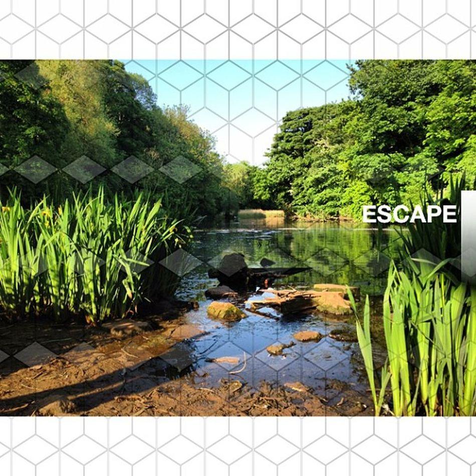 Photooftheday InstaCC Instaccselected31daysd8 Escape K8marieuk Nature Pond Reservoir Lake Water Suttoninashfield Photo365 Reflection Green Magical Sunny Sunday Sunshine Summer