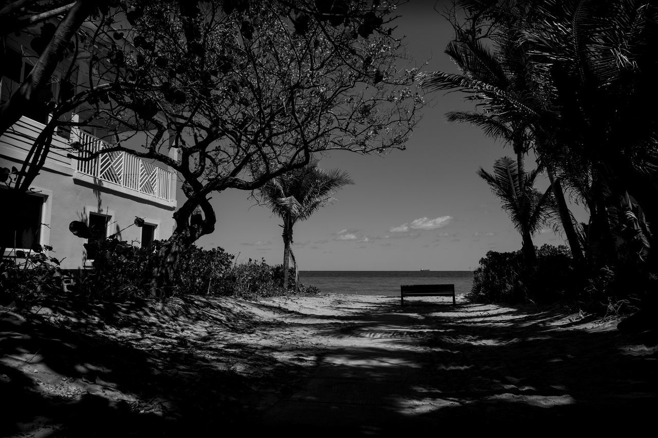 Love is a Beach Beach Beauty In Nature Blackandwhite Photography Branch Day Florida Fujifilm_xseries Growth Horizon Over Water Light And Shadow Nature No People Outdoors Photographyisthemuse Scenics Sea Sky Tranquil Scene Tranquility Tree Water