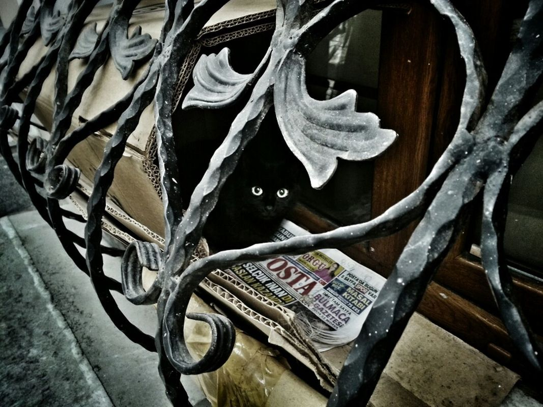 I see you... Hanging out cat Walking around streetphotography animals Taking Photos Street Life shootermag BLackCat helloworld eye4photography  by Sinemis Koç