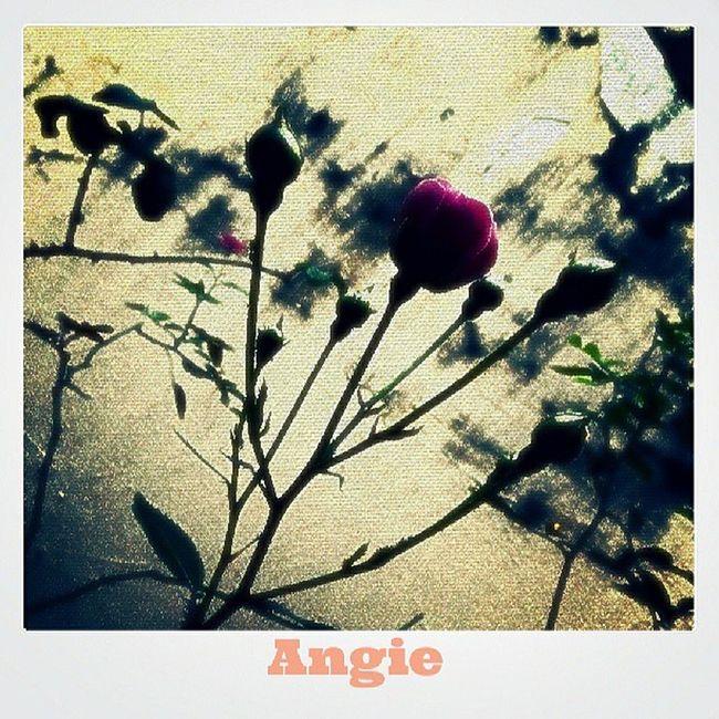 Fotomorfose Fotoencantada Love Instagood me photooftheday girl picoftheday happy like igers sun instaphoto like4like likeforlike heart loveyou