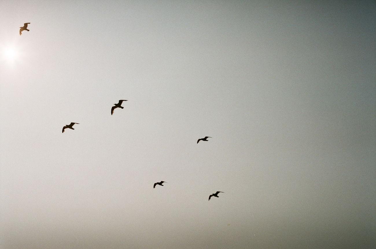 Seagulls Birds Sea Tokyo Bay