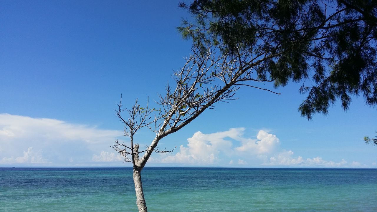 Sea Tree Sky Blue Nature Water Horizon Over Water Outdoors Beauty In Nature Landscape No People Day Beach Cloud - Sky Single Tree Sky And Clouds Sand Skyblue Sand & Sea INDONESIA Indonesia_photography Visitindonesia Wonderfulindonesia Sky And Sea Sunlight