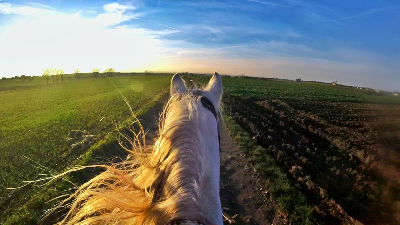 Cloudart Clouds And Sky Girls Girl Cloud Snapseed Street Sun Sunshine Sunset Goprophotography Goprohero4 Goprooftheday Gopro Session Horses Horse Horsesofinstagram Horselove EyEmNewHere