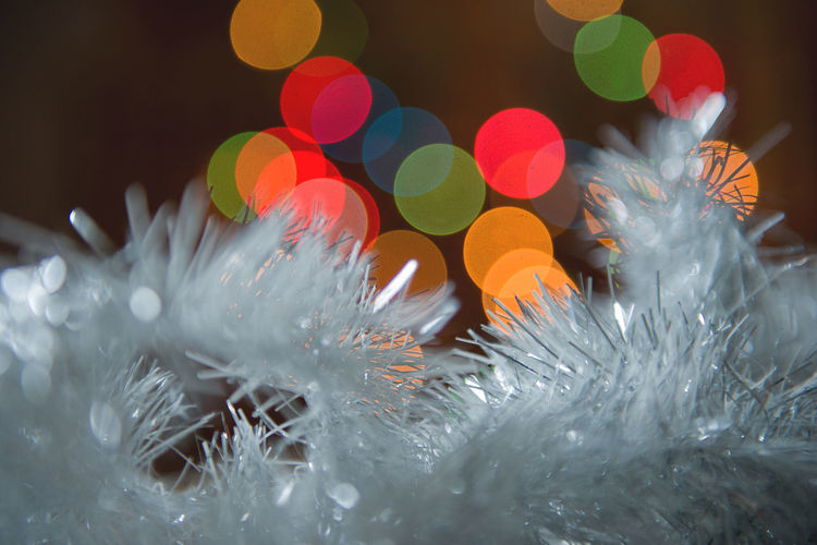 Christmas Lights Christmas Lights!  New Year Beauty In Nature Bokeh Close-up Cold Temperature Decoration Freshness Indoors  Nature Night No People Winter Holidays