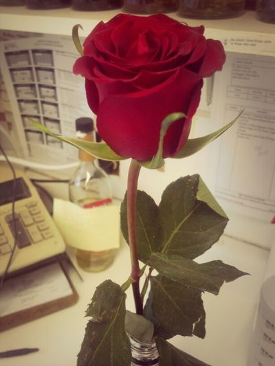 A flower just because... My boyfriend >>>>
