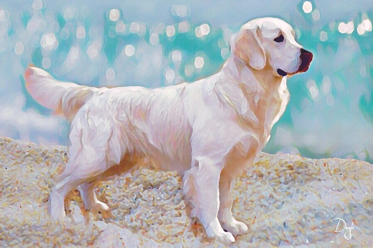 dog, pets, one animal, domestic animals, animal themes, full length, mammal, no people, water, day, indoors, portrait