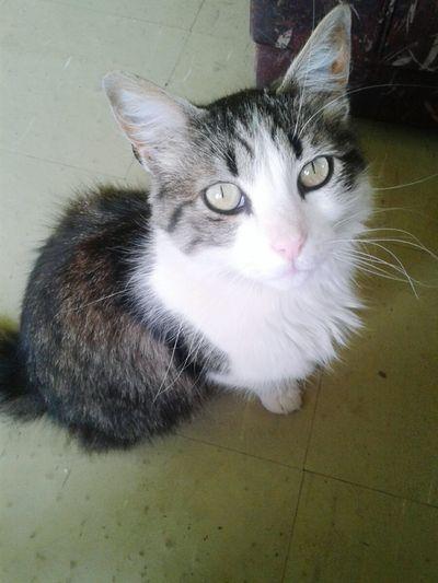 Mi rey 👑 Kyu Cats Catslover Eyes Amorgatuno Animal
