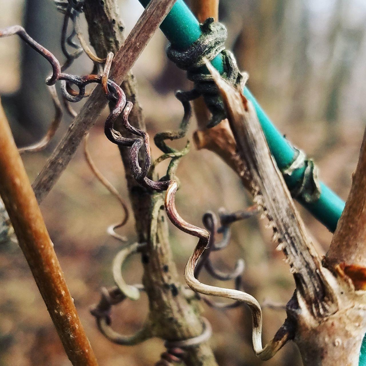 Vines Spring Naturelover Nature NatureTherapy