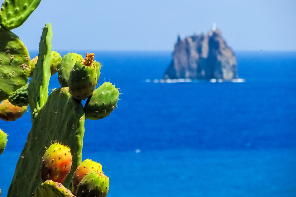 Beautiful stock photos of italien, Beauty In Nature, Blue, Cactus, Close-Up