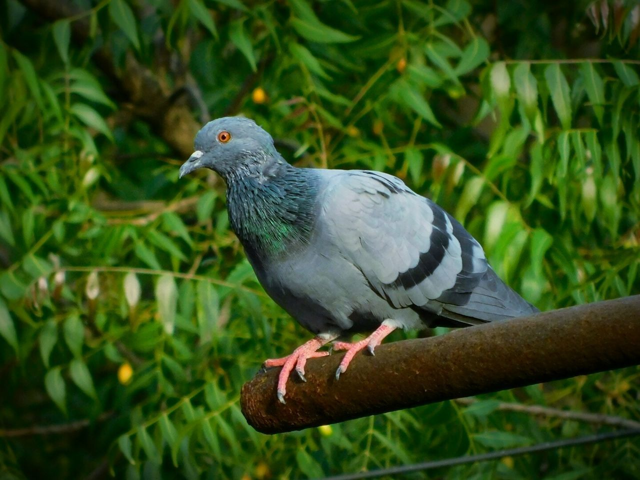 bird, animal themes, one animal, animals in the wild, perching, animal wildlife, day, focus on foreground, close-up, outdoors, no people, nature