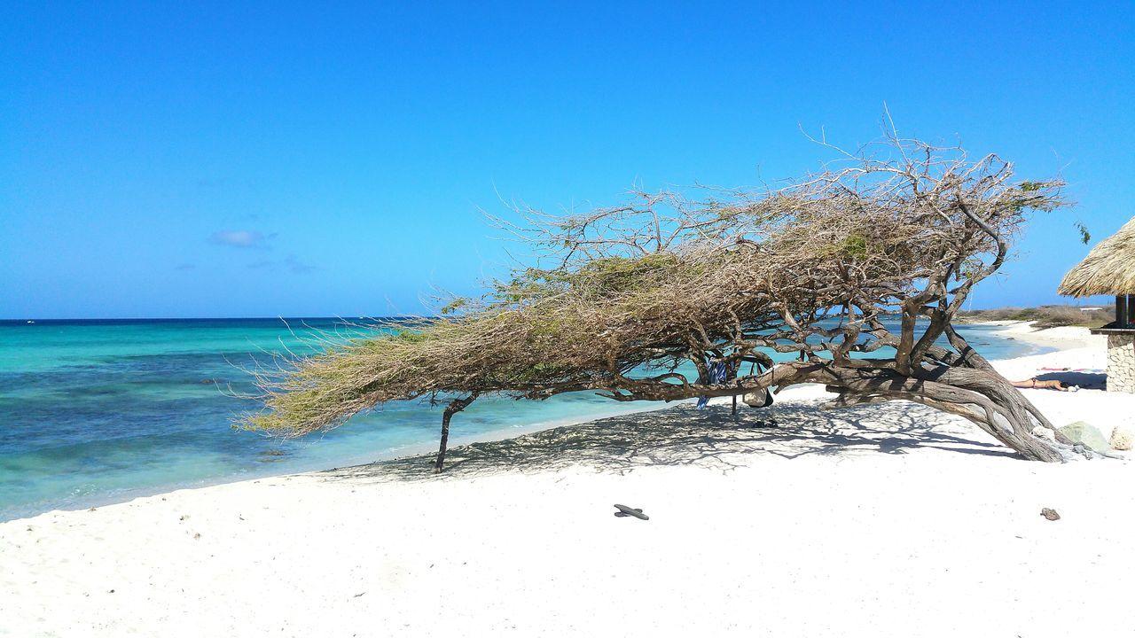Colour Of Life Aruba One Happy Island Sea Sun Beach Relax Beautiful