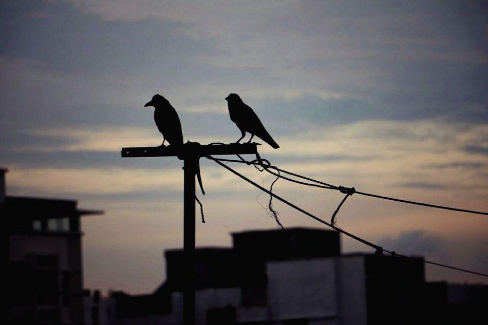 Love Birds. Sunset Nature Love In The Air First Eyeem Photo Sillhouette Chittagong Bangladesh EyeEmNewHere Long Goodbye