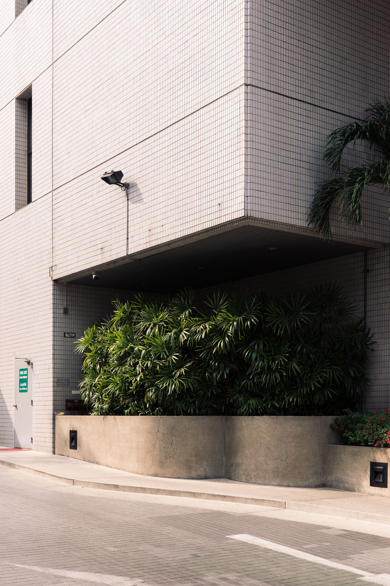 Architecture Botany Building Exterior Built Structure City City Life Green Growth Minimal Minimalist Architecture Modern No People Outdoors Palm Tree Plants Tiles Tree The Architect
