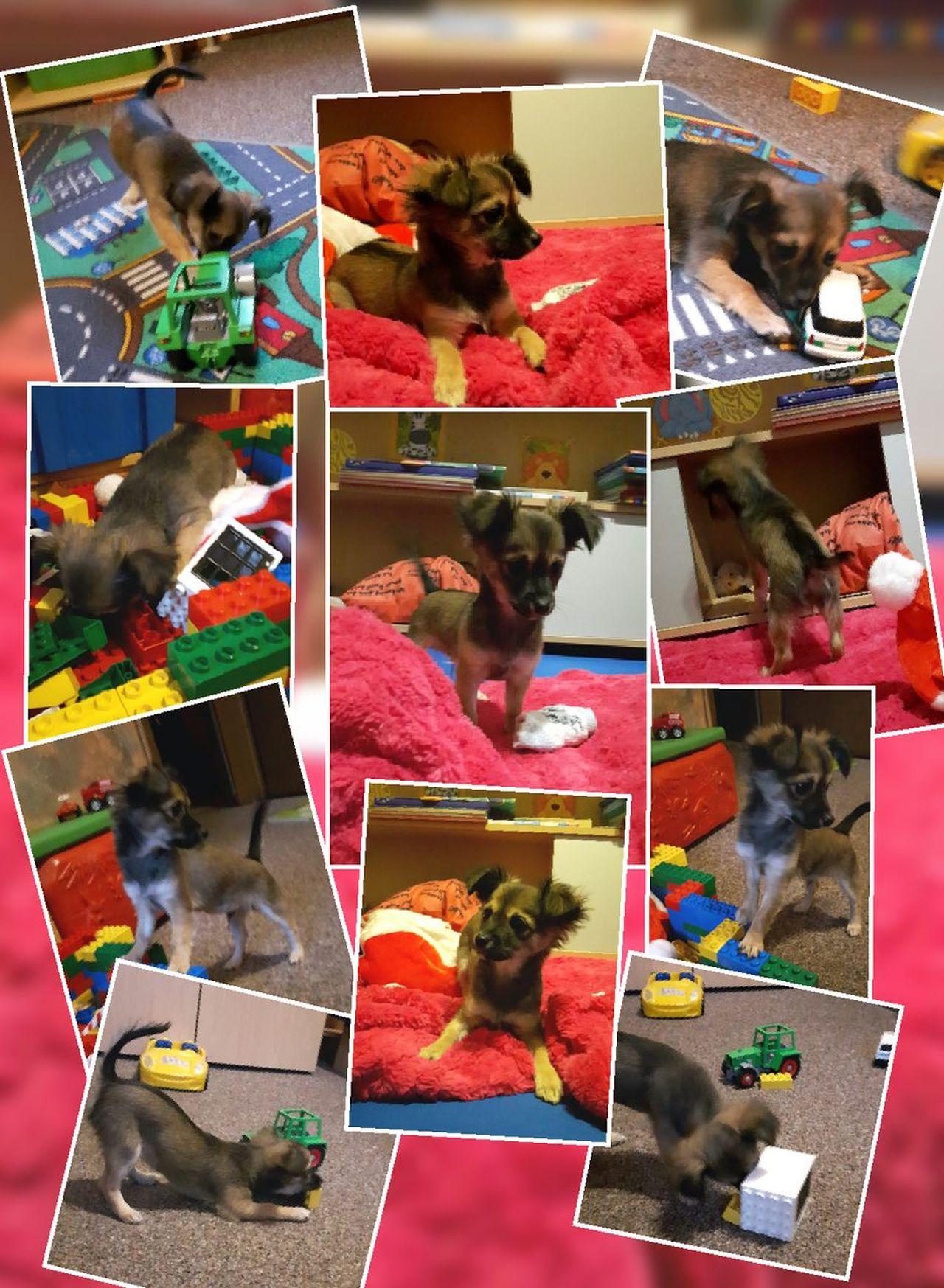Und so eine Stunde im Kinderzimmer kann richtig Spaß machen 😀😀❤️😀 Collection Pets Of Eyeem Dog Lover Hundefotografie Dog Photography Hunde Hundewelpe Dog Animal Themes One Animal Pets Beliebte Fotos