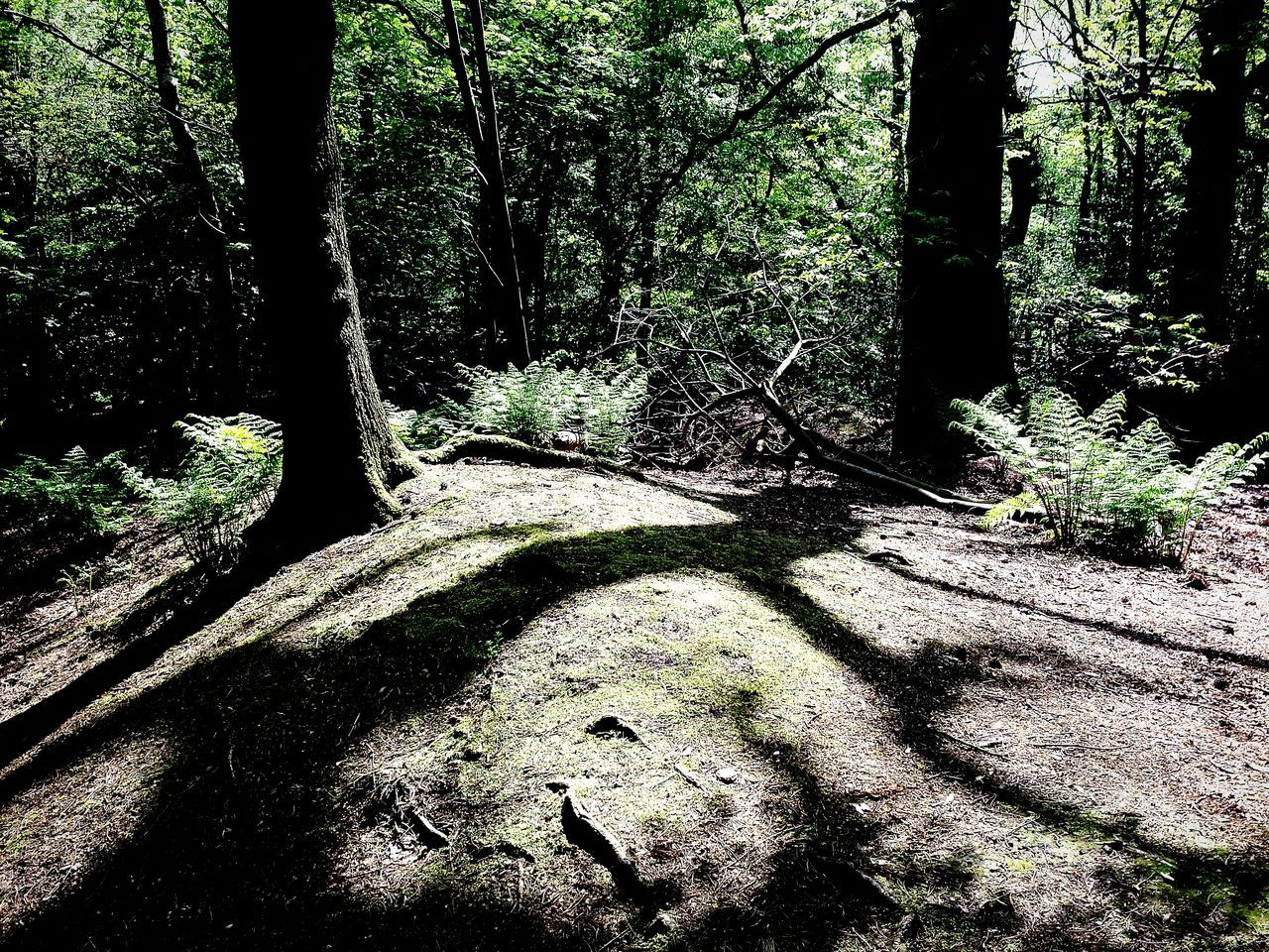 Alderley Edge Light And Shadows Natures Art WoodLand