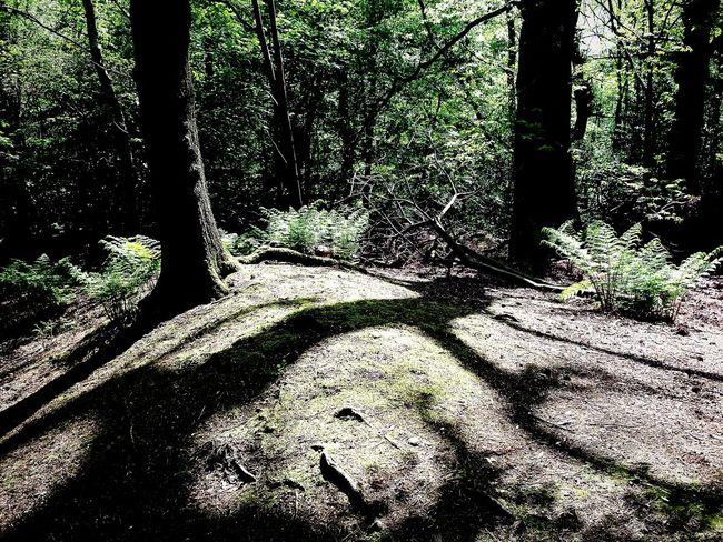 Alderley Edge Light And Shadows Natures Art WoodLand