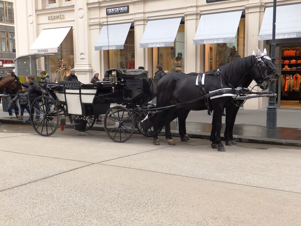 Cab Fiacre Fiaker Horse Mode Of Transport Street Transportation Vienna