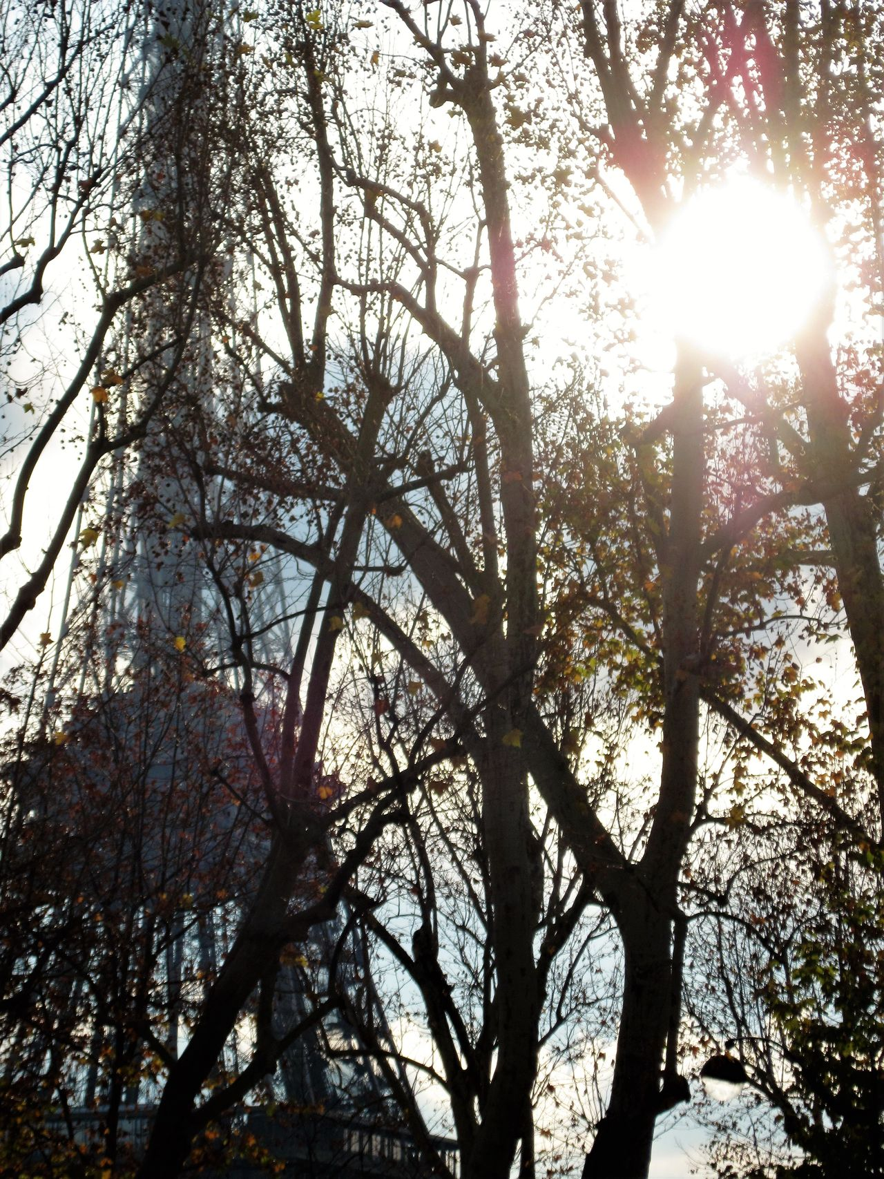 Back Lit Beauty In Nature Branch Day Eiffel Tower Growth Lens Flare Low Angle View Nature No People Outdoors Sky Streaming Sun Sunbeam Sunlight Tranquility Tree Trees