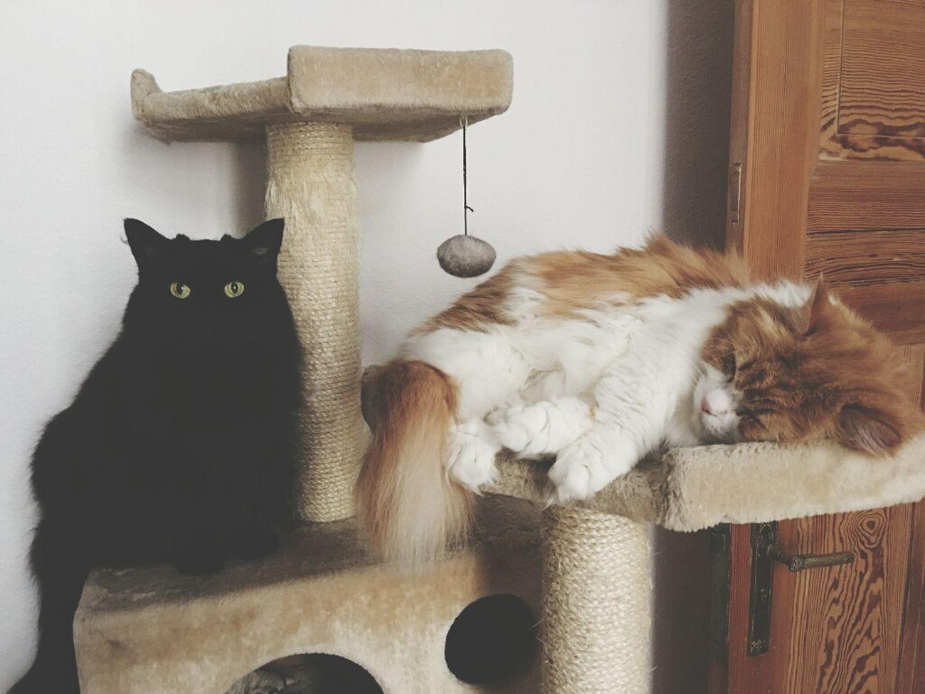 Ленивое воскресенье утро Коты Выходные животные