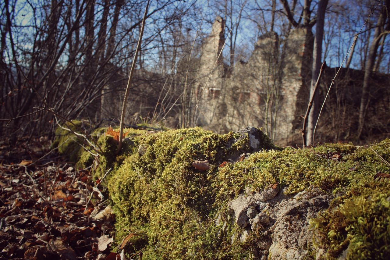 Abondoned Autumn Autumn Colors Autumn Leaves Beauty In Nature Castle Forest Forestwalk Hiking Hiking Trail Into The Woods Leaf Light And Shadow Moss Nature Nature Nature Photography Nature_collection Red Ruine Tree Tree Trees Wall Wood