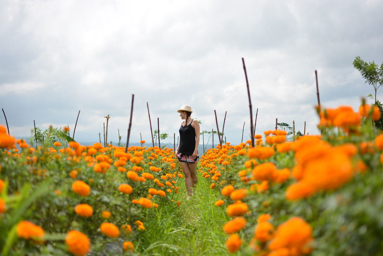 One Person One Woman Only Growth Rural Scene Flower Only Women Outdoors Nature Young Adult People Day Marigold Field Marigold In Full Bloom. Marigoldflower Marigold Flower Tradition Beauty Mountain View Sky Backgrounds Women Beauty In Nature Agriculture Growth Nature Plant