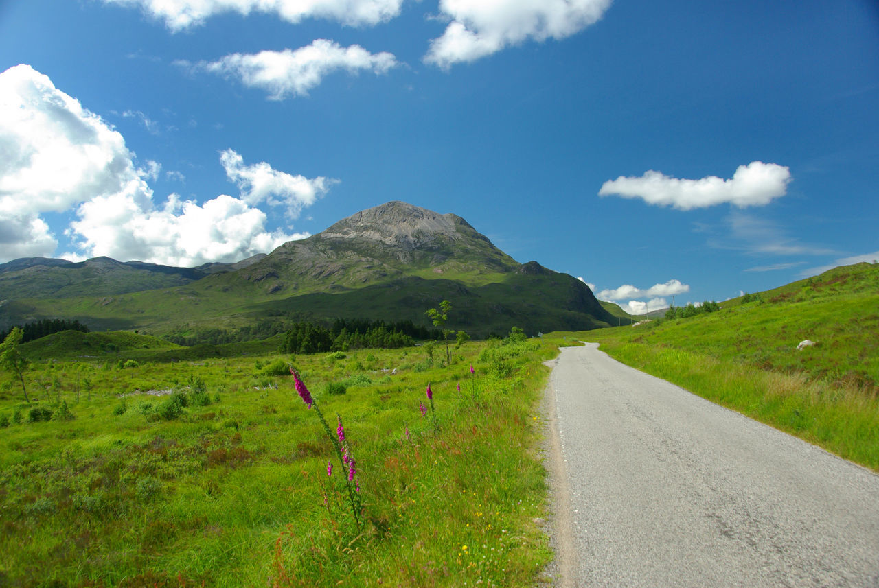 The Road to Torridon Beauty In Nature Cloud - Sky Day Flower Foxglove Grass Green Color Growth Idyllic Landscape Mountain Nature No People Outdoors Scenics Scotland Wild Landscape Scottish Highlands Single Track Road Sky Sunlight The Way Forward Torridon Mountains Tranquil Scene Tranquility Wester Ross