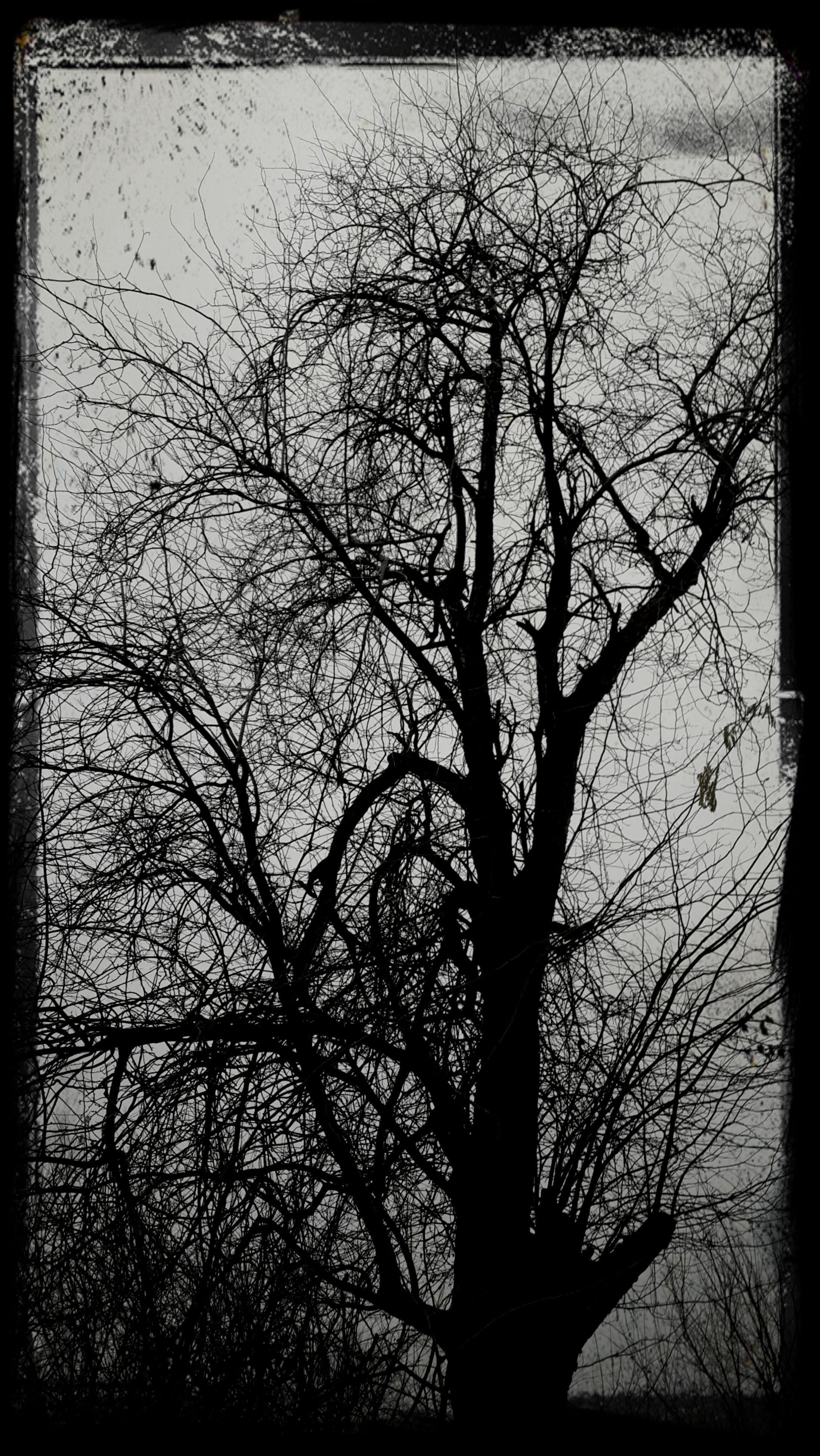 bare tree, transfer print, branch, tree, silhouette, auto post production filter, tranquility, nature, tranquil scene, beauty in nature, sky, scenics, low angle view, sunset, outdoors, growth, dusk, no people, tree trunk, dead plant