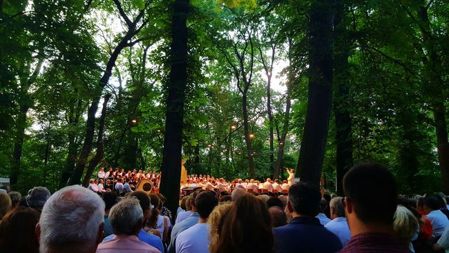 Beethoven Days - Martonvásár, Hungary Concert In The Forest island Concert Concert Photography Concert In Nature Nature_collection Nature Photography Forest Forest Photography