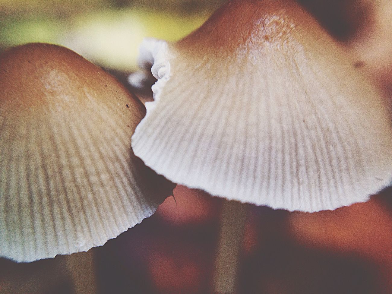 Champignon Maximum Closeness Nature Beauty In Nature