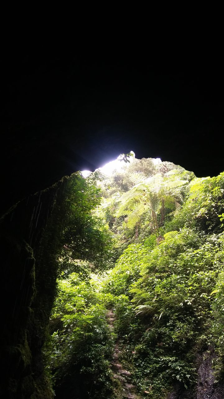 mountain, night, nature, tranquility, no people, beauty in nature, tunnel, clear sky, cave, landscape, mountain peak, forest, illuminated, scenics, adventure, outdoors, tree, sky