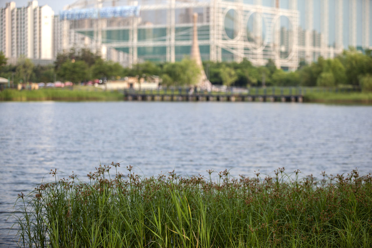 Aquatic Plants Beauty In Nature Bucheon Lake Park City Day Focus On Foreground Grass Grassy Green Green Color Growth Idyllic Lakescape Lakeshore Landscape Nature No People Outdoors Plant Rippled Scenics Sky Tranquil Scene Tranquility Water