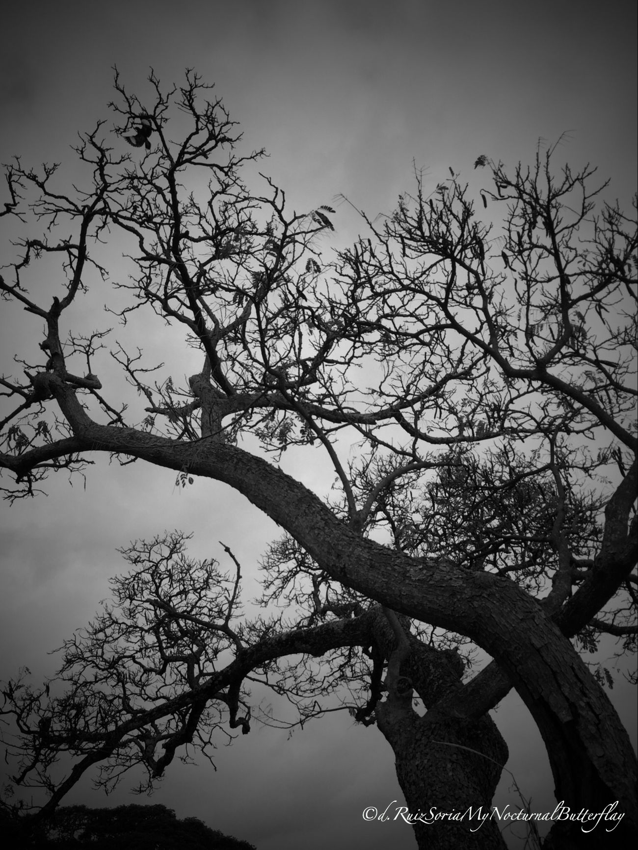 Black And White EyeEm Best Shots - Black + White EyeEm Nature Lover Bw_collection Texture Nature_collection Hitchcockian TreePorn My Nocturnal Illusions Darkart