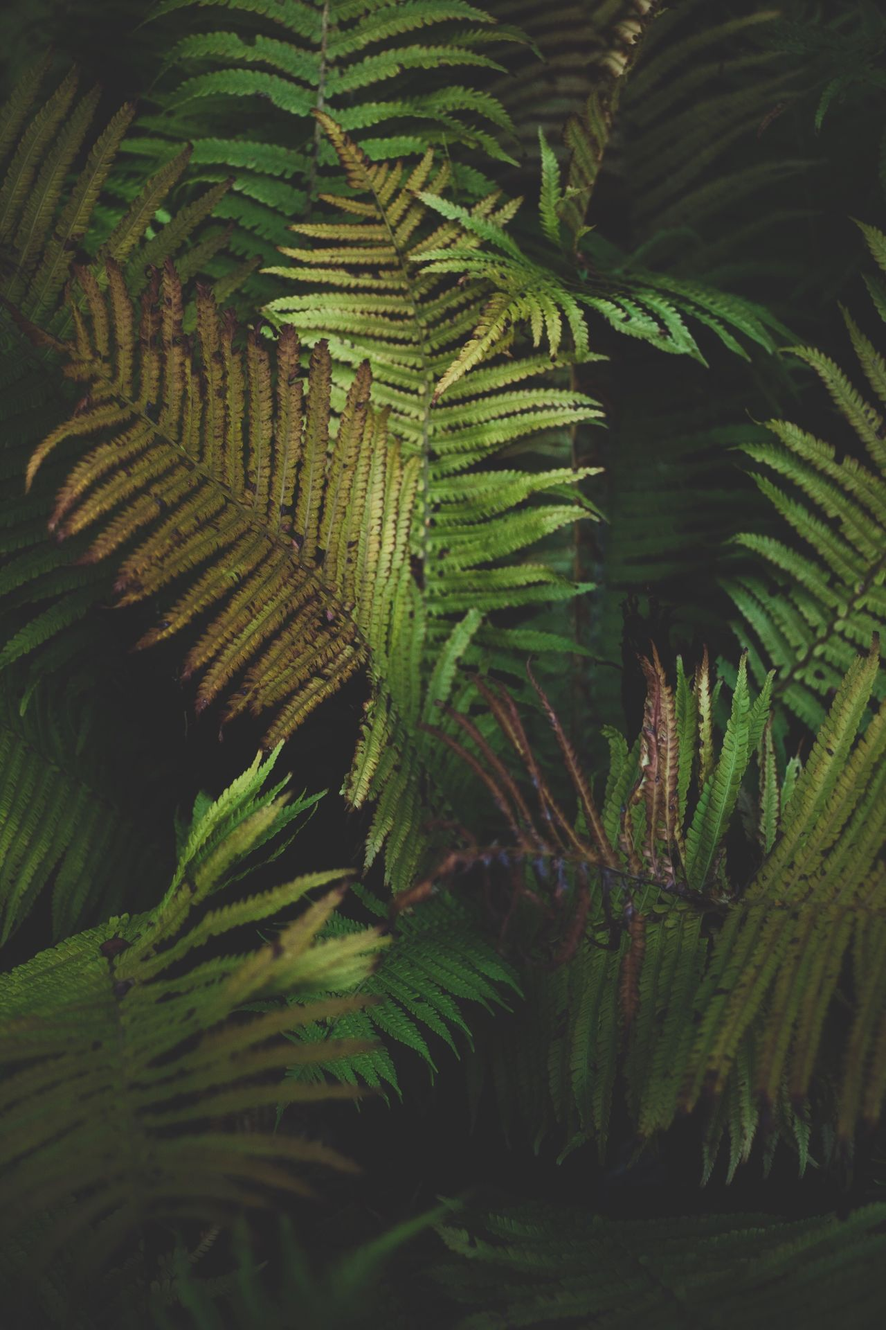 Growth Green color Nature leaf fern Plant beauty in Nature frond no people day Tranquility outdoors close-up Palm tree Tree Freshness Palm tree ferns