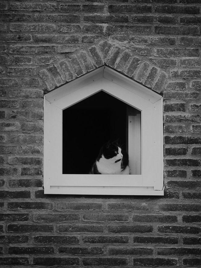 Cat Katt Svartvitt Blackandwhite Window Fönster Framing M.Zuiko 45mm 1:1,8 Brick Wall