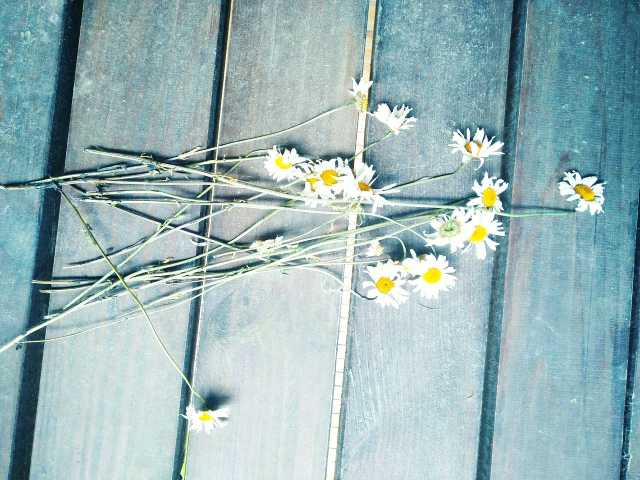#dead #flowers #white #mess #wood #throw #ground #green #save #planet #daisy #nature #vs #people #potd #like Strange