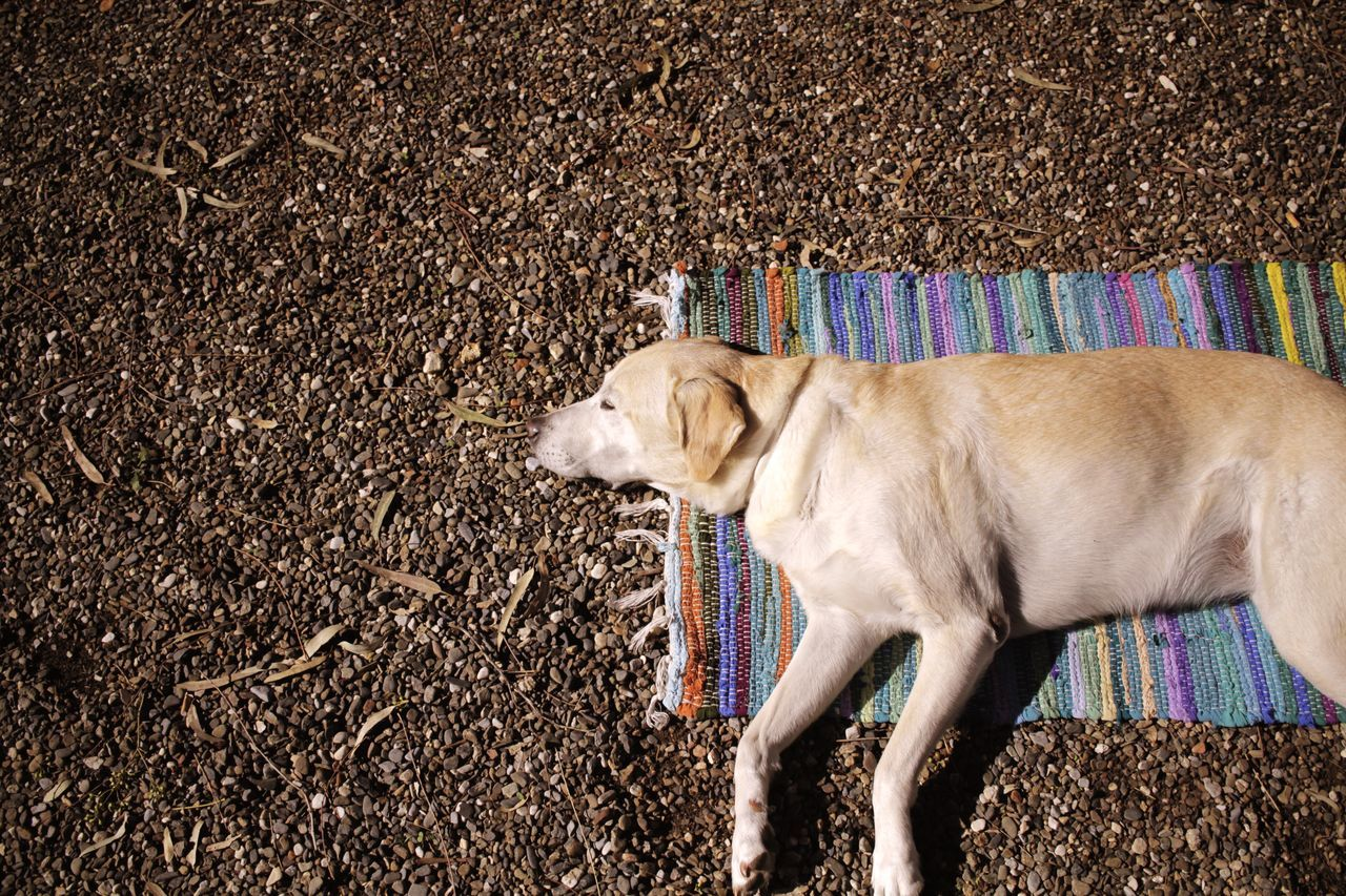 Dog Lying On A Carpet Outdoors