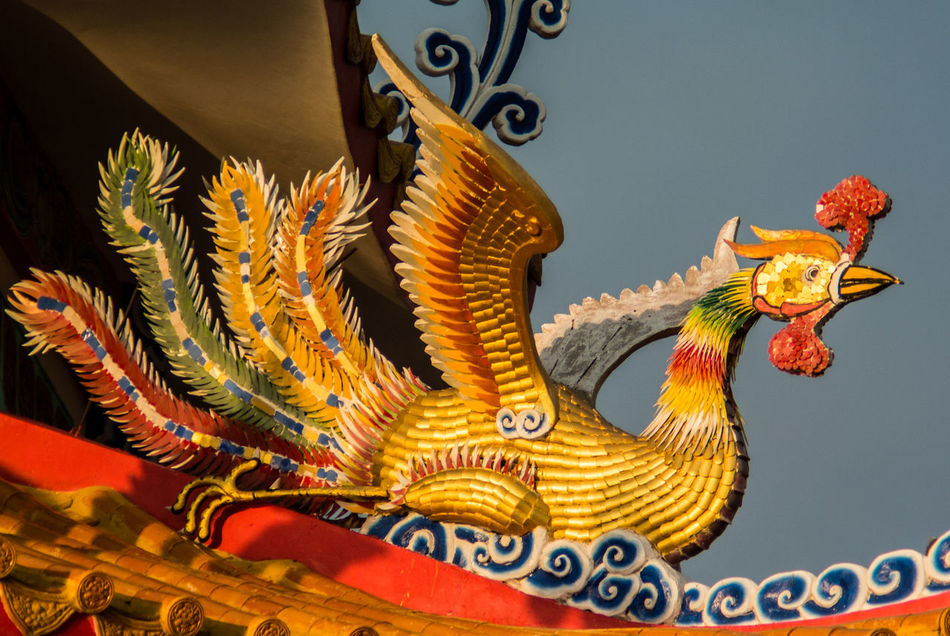 Phenix sculpture decorate on roof top Art Art And Craft Bird Chinese Chinese Art Chinese Style Close-up Creativity Culture Cultures Decoration Decortt Detail Fantasy Golden Pattern PHENIX Sculpture Statue Swan Variation