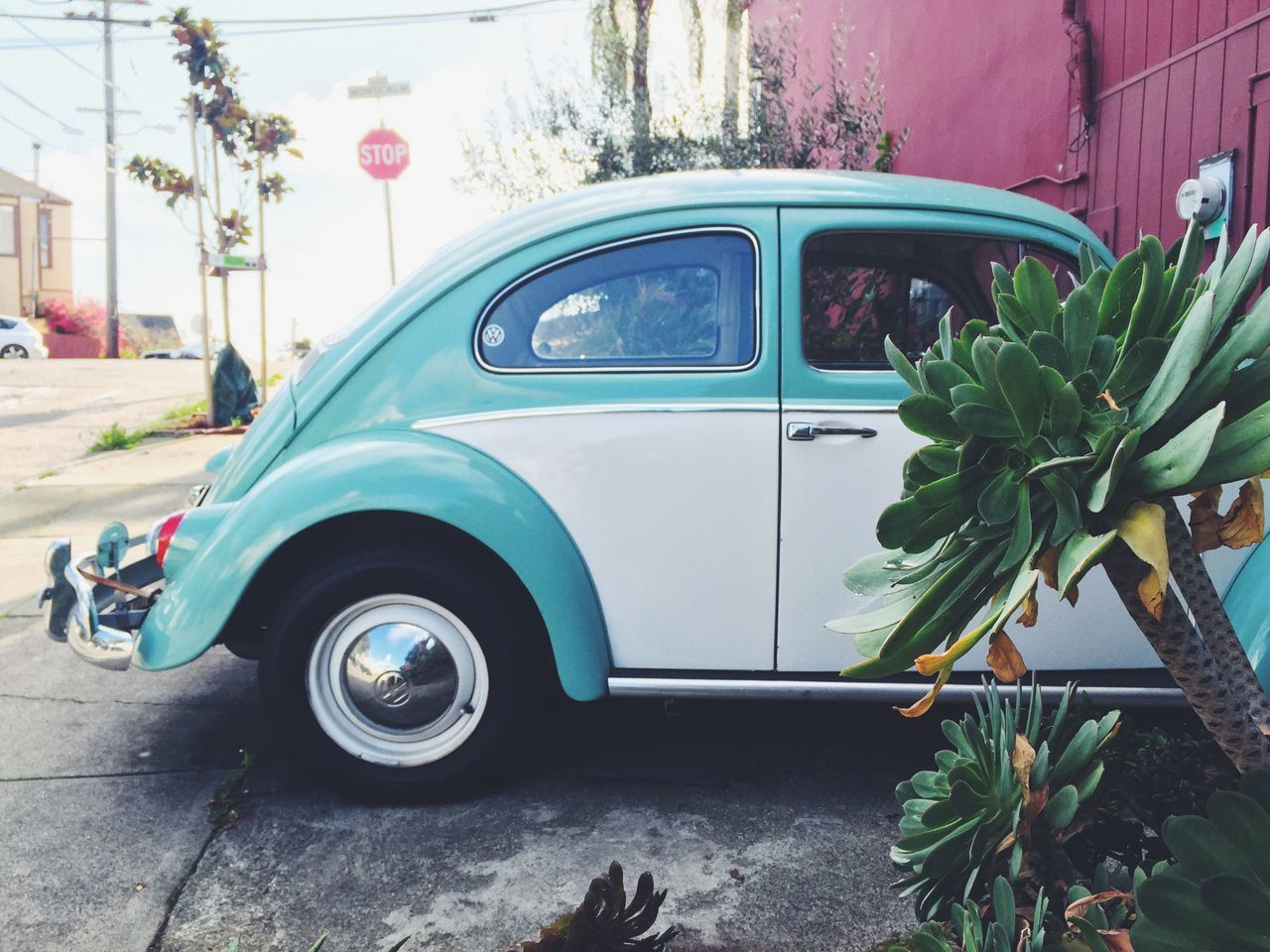 California Succulents & VW Beetle