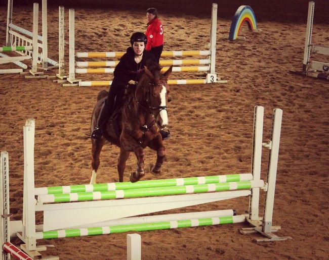 Horse Jumping Equestrian