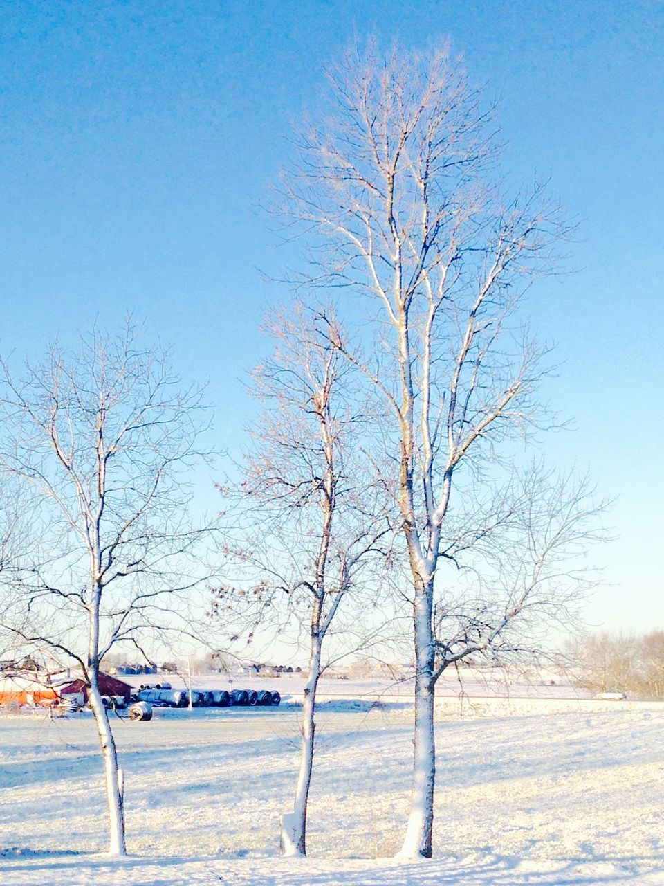 Bare Trees On Snow Covered Field Against Clear Sky